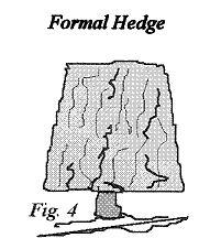 Pruning Formal Hedges