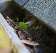 Learning Everything You Need to Know about Gutter Cleaning