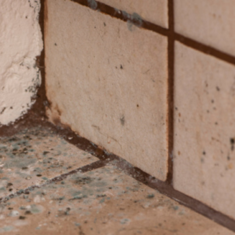 How to Get Rid of Shower Mold Using Green Products